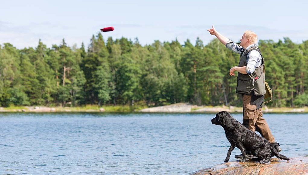 Hunting Dog Training - The Ultimate Guide