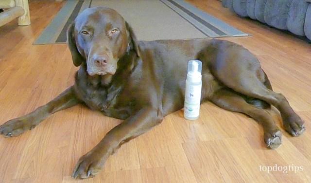 Pura Naturals Pet Organic Waterless Dog Shampoo