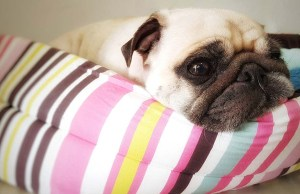 Self-Warming Dog Bed - What is It and Does Your Dog Need One