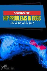The 5 Signs of Hip Problems in Dogs (And What to Do)