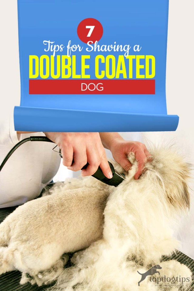 The 7 Tips for Shaving a Double Coated Dog