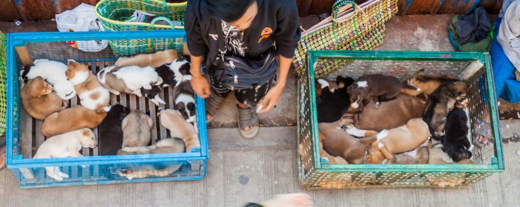 The Buyers of SmuggledDogs
