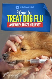 The Guide - How to Treat Dog Flu and When to See Your Vet