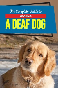 The Step by Step Guide to Owning a Deaf Dog