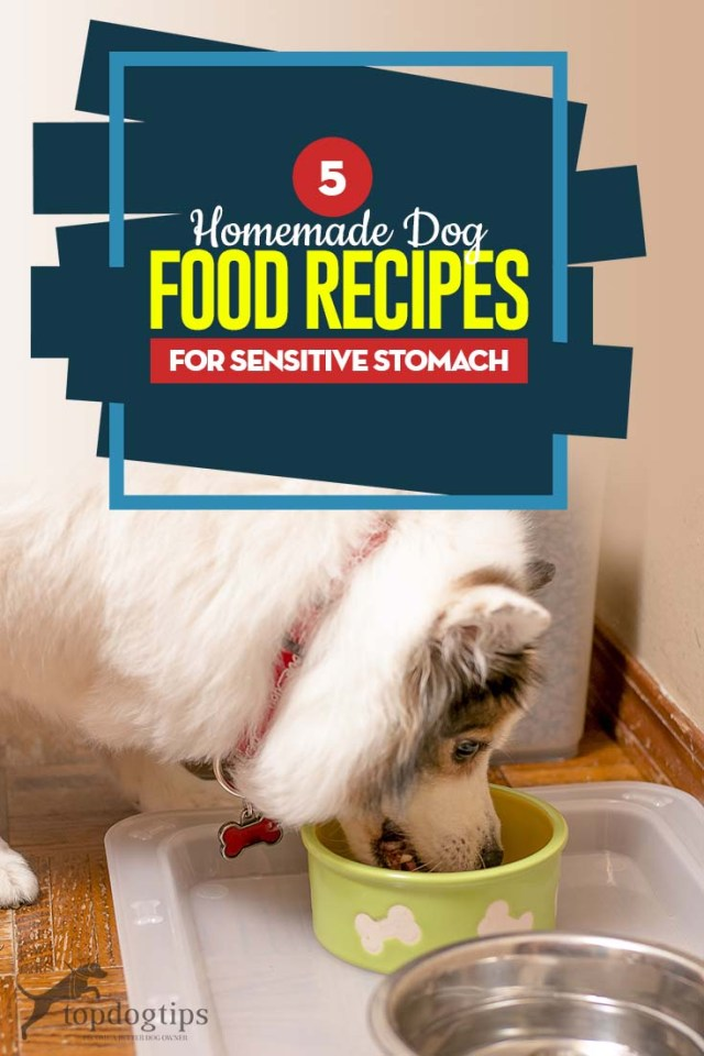 Top 5 Homemade Dog Food for Sensitive Stomach Recipes