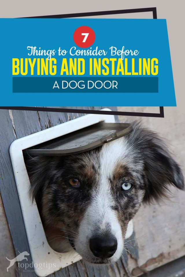 Top 7 Things to Consider Before Buying and Installing a Dog Door