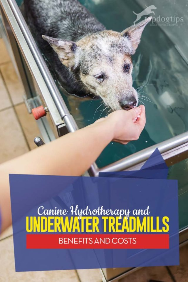 Top Benefits of Hydrotherapy and Underwater Treadmills for Dogs