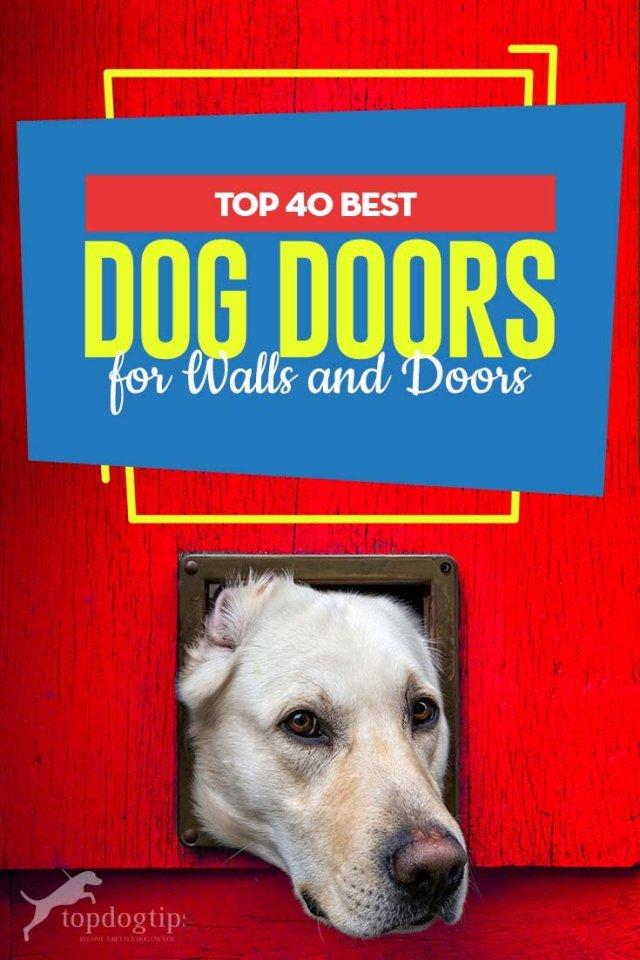 Top Rated Dog Door 2020