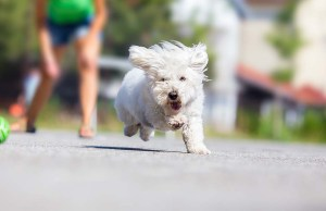 15 Fun Ways You Can Workout With Your Dog