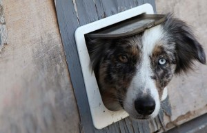 7 Things to Consider Before Getting a Dog Door
