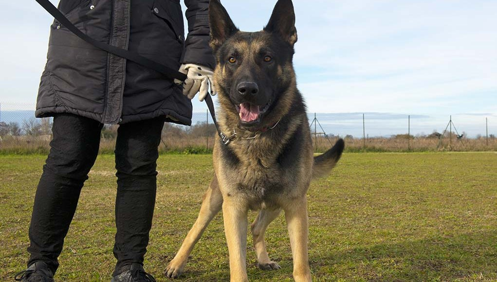 A Dog for Personal Protection - 6 Things You Must Consider First