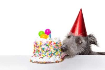 Birthday and Adoptaversary Celebrations