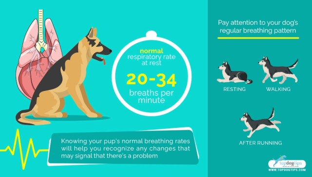 Breathing Problems in Dogs