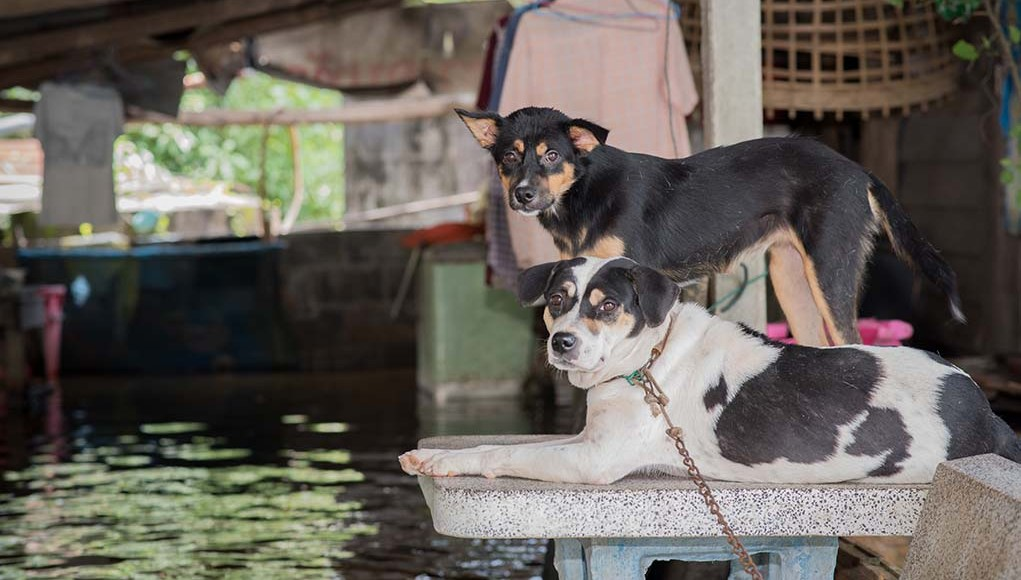 Disaster Preparedness - Are You and Your Pet Prepared