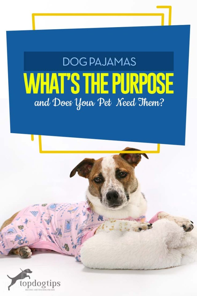 Dog Pajamas Guide - What's the Purpose and Does Your Pet Need Them