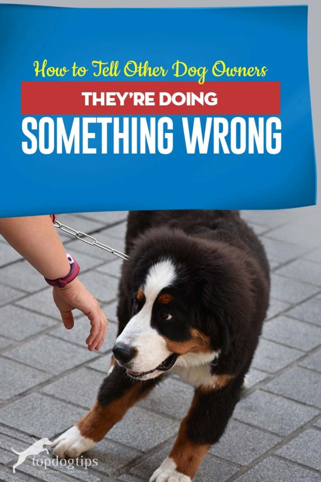 Here's How to Tell Other Dog Owners They're Doing Something Wrong