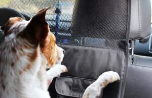 The Best Dog Car Barrier