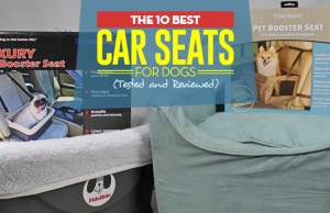 The Best Dog Car Seat Review