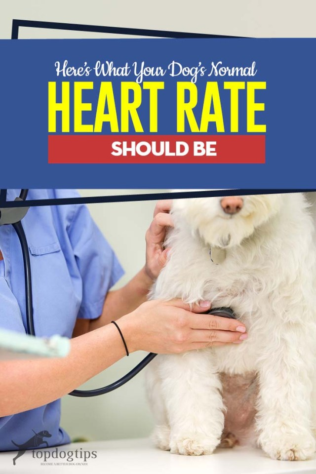 The Guide to Normal Heart Rate for Dogs Important Things to Know
