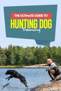 The Ultimate Guide to Hunting Dog Training