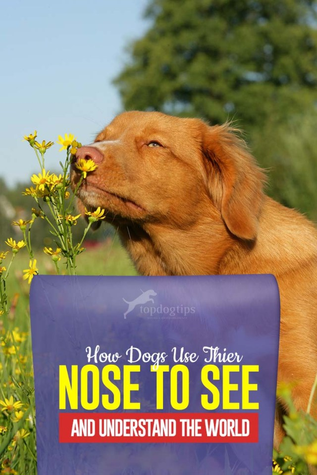 This Is How Dogs Use Their Nose to See and Understand the World