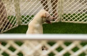 5 Best Open-Top Outdoor Dog Kennels