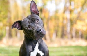 7 Cool Facts About Dogs You Didn't Know