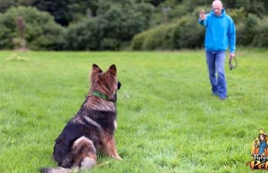How to Choose the Right Dog Trainer