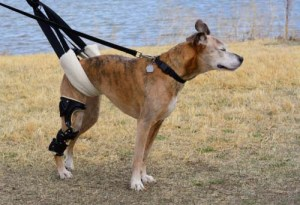 How to Treat Hip Problems in Dogs