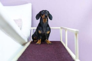 Install Dog Ramps or Use Pet Steps