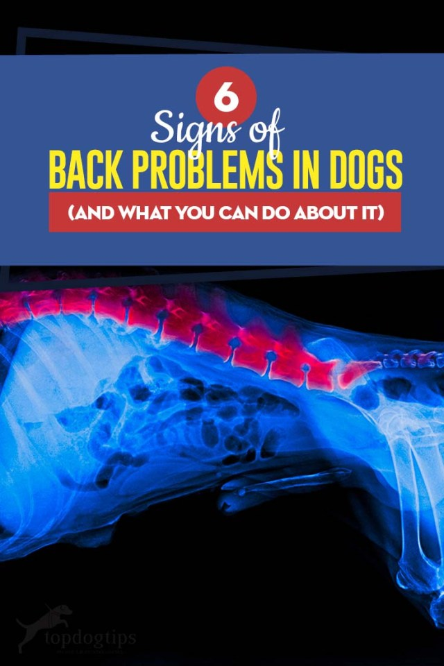 The 6 Signs of Back Problems in Dogs and What You Can Do About It