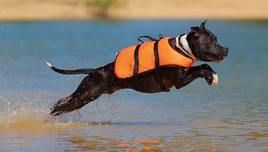 The Best Dog Life Jackets