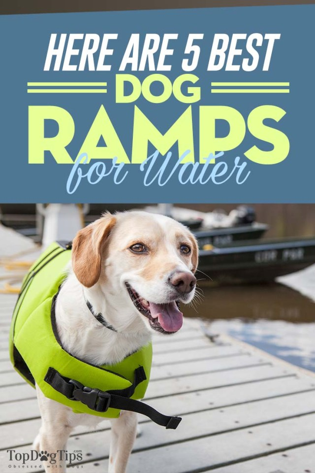 Top 5 Best Dog Ramps for Water Pools Boats