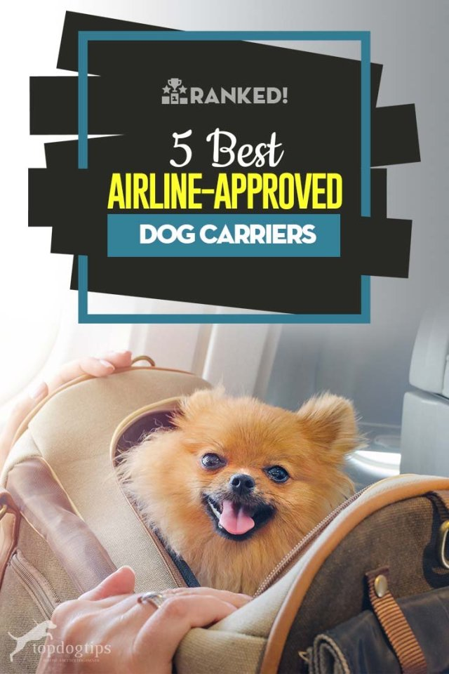 Top Rated Best Airline Approved Dog Carrier Brands