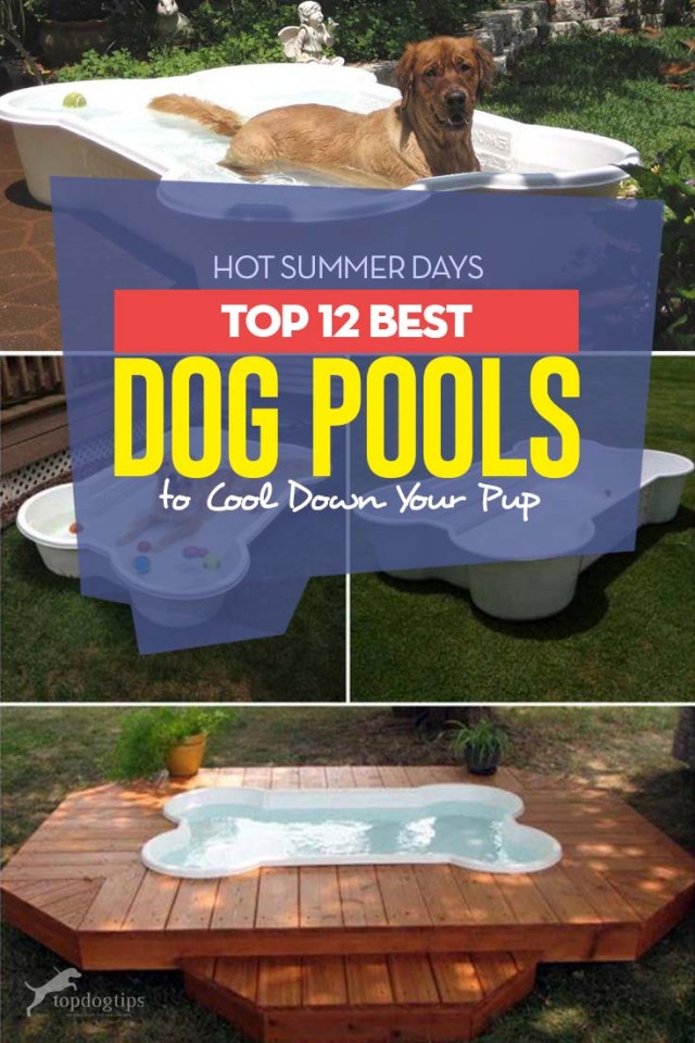 12 Top Rated Best Dog Pool Choices for Summer