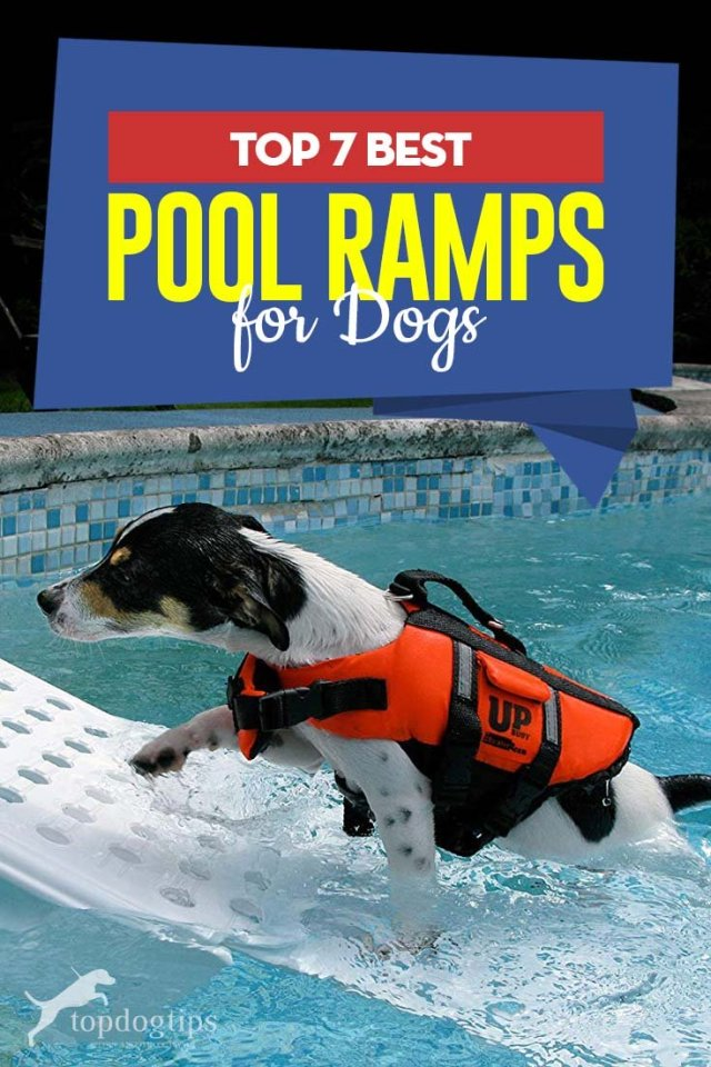 7 Top Rated Best Dog Pool Ramp Brands