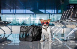 Are Dogs Allowed in Airports And Tips for Air Travel