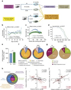 Fasting study in mice