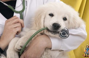 Paying for Veterinary Expenses You Can't Afford