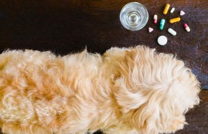 The 10 Best Dog Anxiety Medication Over the Counter and Alternatives