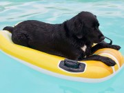 The 5 of the Best Pool Floats for Dogs to Swim On