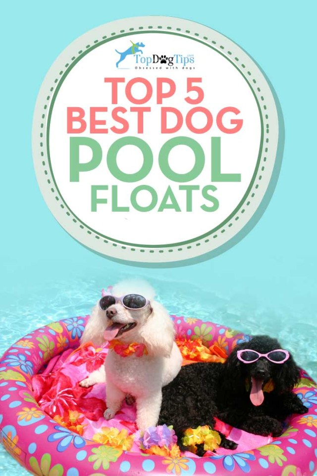 Top Rated Best Pool Floats for Dogs to Swim On This Summer