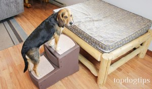 Pet Gear Easy Step II Pet StairsBest for senior dogs or pets recovering from an injury