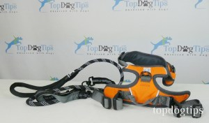 What you should know before buying a dog harness