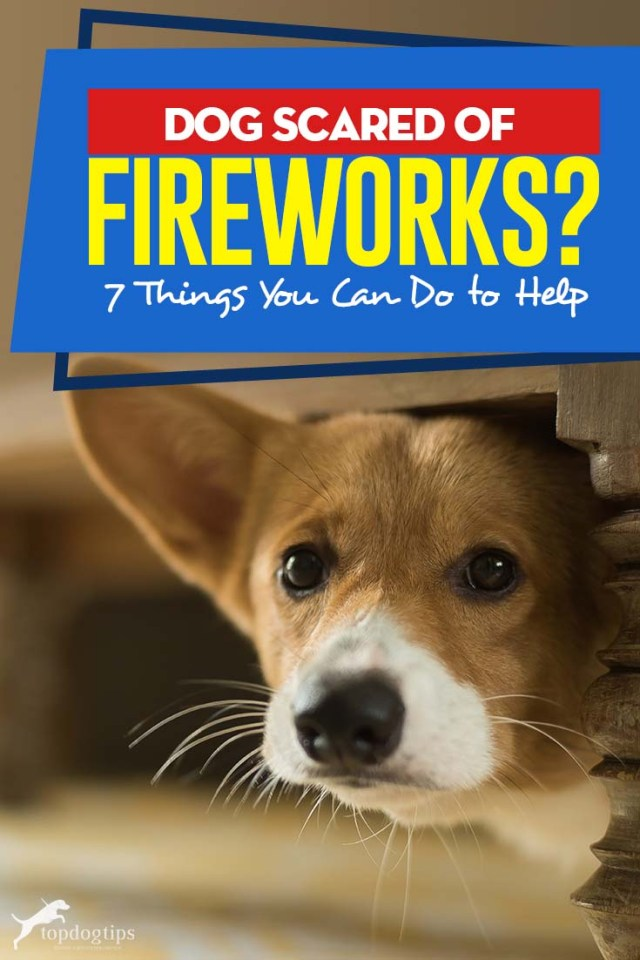 Dog Scared of Fireworks - 7 Things You Can Do to Help