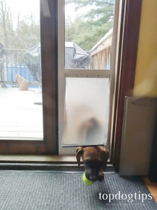 Stay Calm and Patient with Pet Door Use