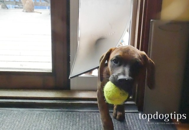 PetSafe Sliding Glass Pet Door
