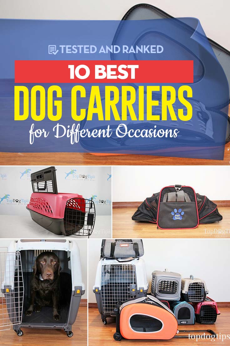 The 10 Best Dog Carriers Review
