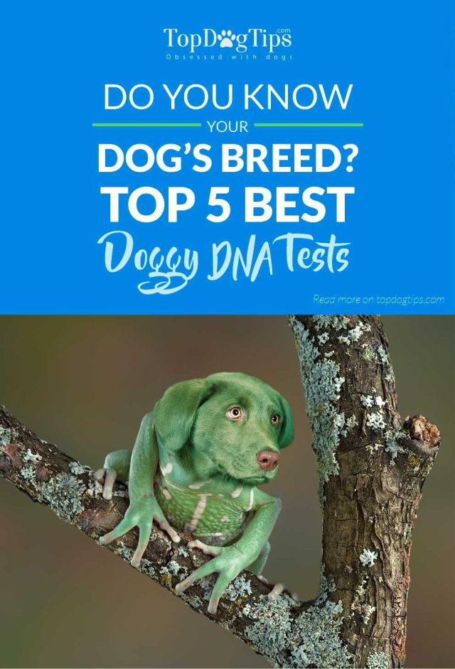 Top Rated Dog DNA Tests