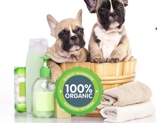 What're Organic Dog Grooming Products and Do You Need Them